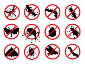 Commercial Pest Control Chennai