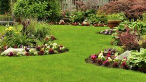 Dandelion Lawn Treatments