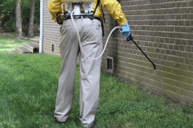 Exploring Real-World Pest Control Sydney Programs