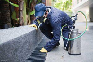 Organic & Chemical Pest Control